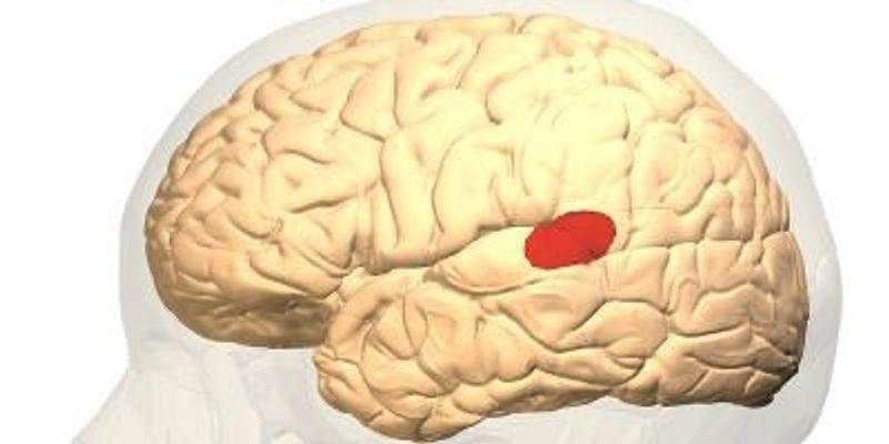 New Human Brain Language Map