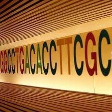 Extra DNA Base Discovered
