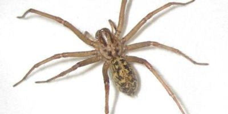 Spider and Centipede Venom Remarkably Similar