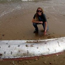 Image of the Day: Stranded Oarfish