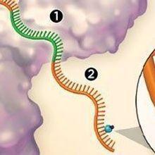 RNA Stucturomics