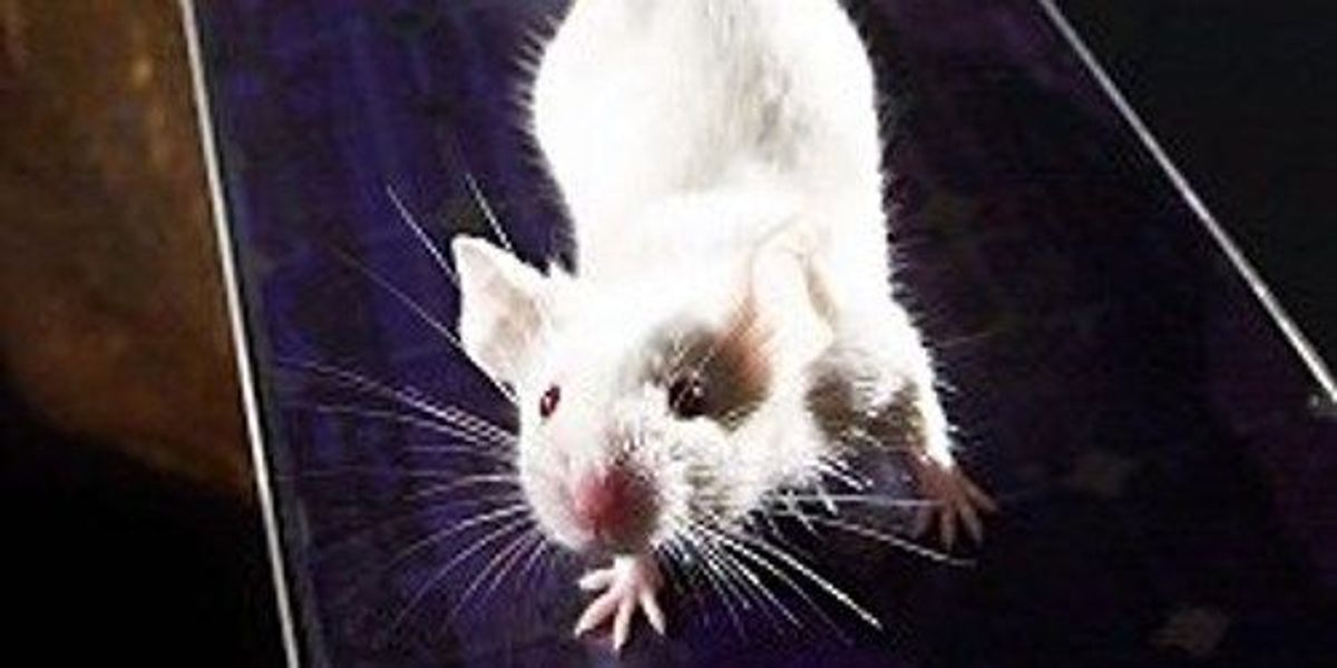 Thin-skinned Space Mice | The Scientist Magazine®