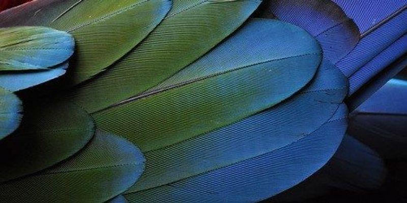 Avian-Inspired Color