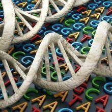 LabQuiz: Genetics