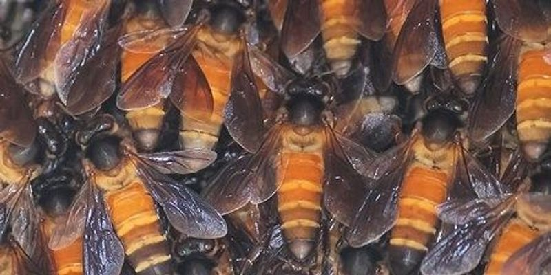 The Evolution of Social Bees