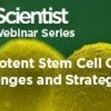 Pluripotent Stem Cell Culture: Challenges and Strategies