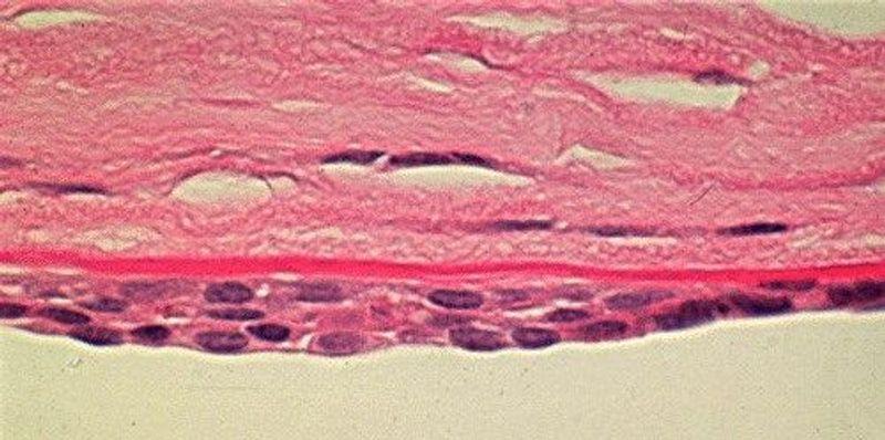 Editing Human Blood Vessel Cells with CRISPR