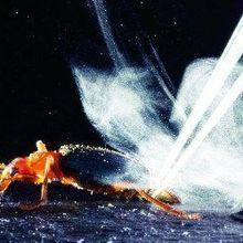 Beetle Bomb