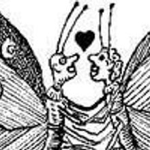 A Most Kinky Moth