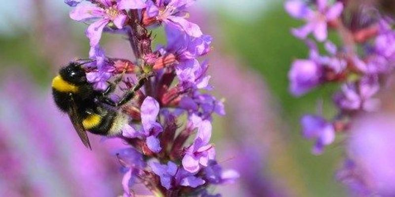 Bees Drawn to Pesticides
