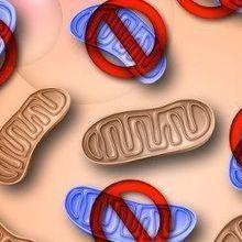 Erasing Mitochondrial Mutations
