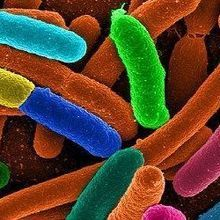 Rare Microbes and Antibiotic Resistance