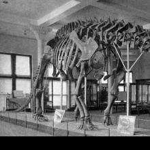 <em>Brontosaurus</em> Regains Dinosaur Status