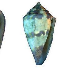 Image of the Day: Seashell Secrets