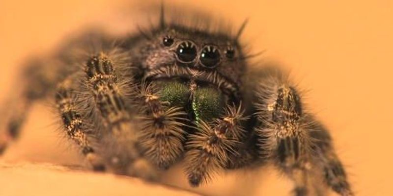 A Spider's Eye View
