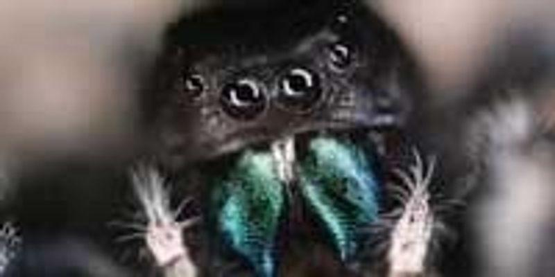 Through a Spider's Eyes