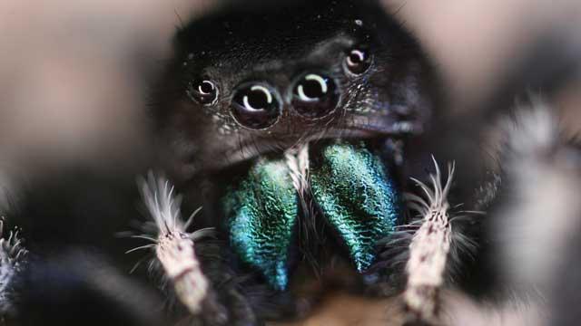 Through a Spider's Eyes | The Scientist Magazine®