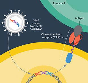 Afbeeldingsresultaat voor foto of car t cell therapy