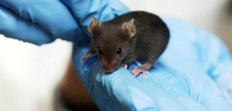 Pain and Itch Neurons Found