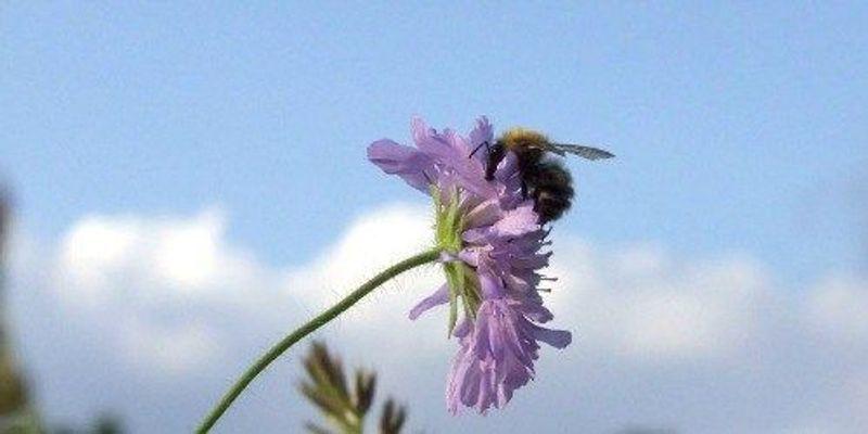 Study: Pesticides Harm Bees