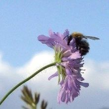 Study: Pesticides Harm Bees