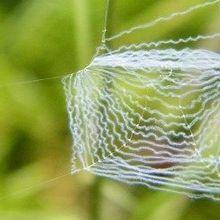 Spinning Recombinant Spider Silk