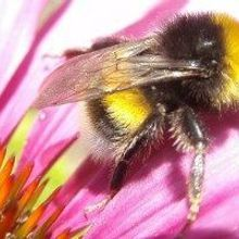 Forgetful Bees Try New Flowers
