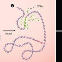 Rethinking Telomeres