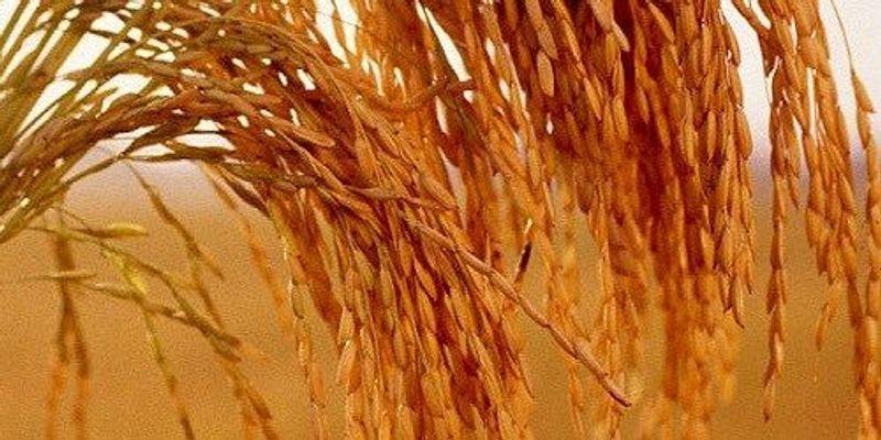 Opinion: On Global GMO Regulation
