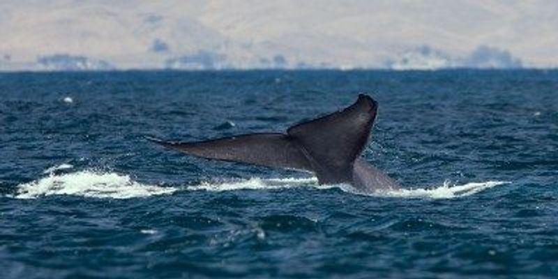 Marine Life Trending Larger