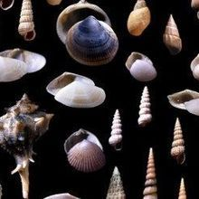 Image of the Day: Adriatic Seashells