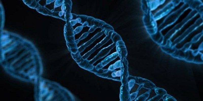 Exploring the Epigenome