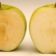 USDA Approves Genetically Engineered Apples