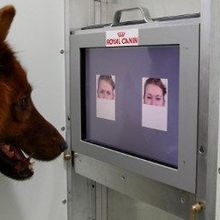 Canine Facial Recognition