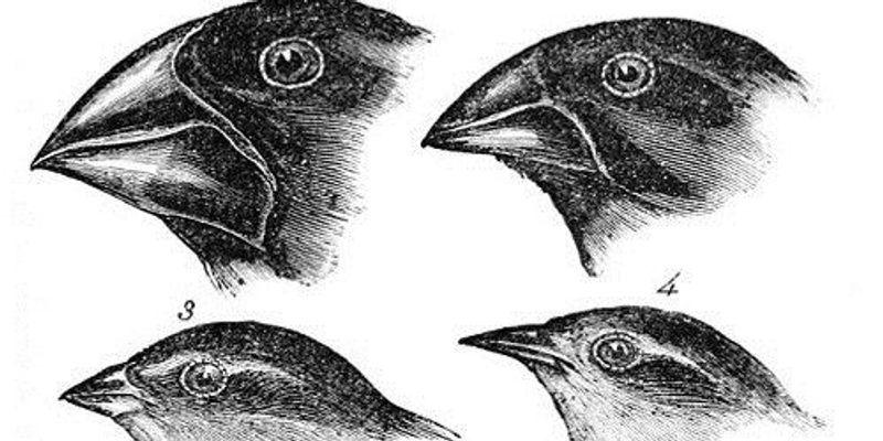Finch Findings