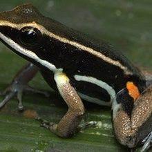 Frog Nurseries