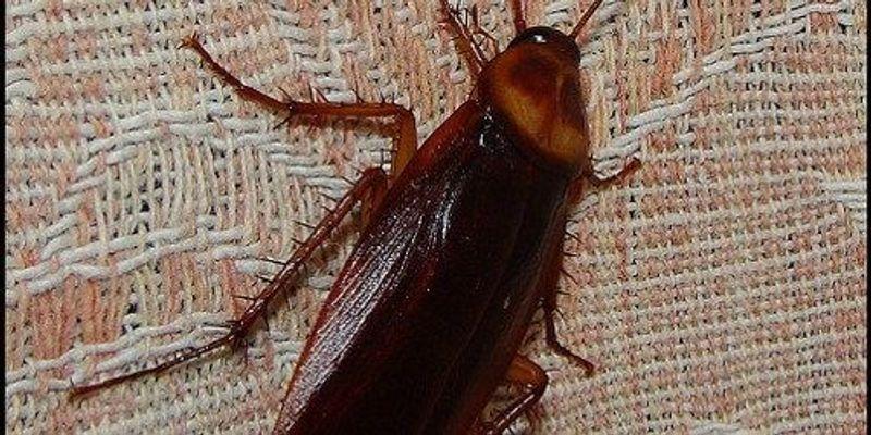 Roach Conformity