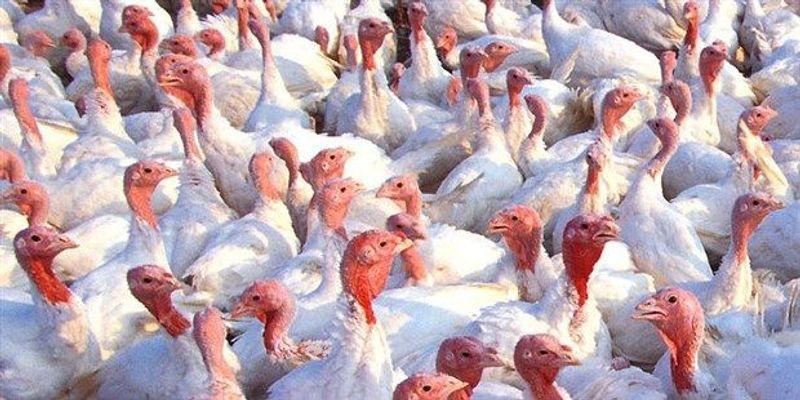 Bird Flu in North America