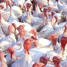 Bird Flu in North America