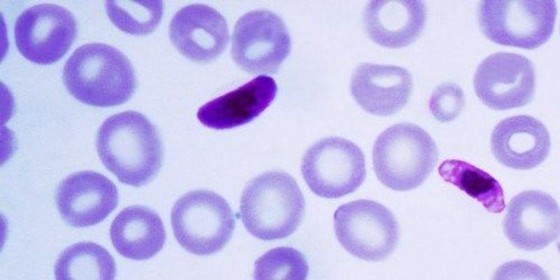Understanding Antimalarial Drug Resistance