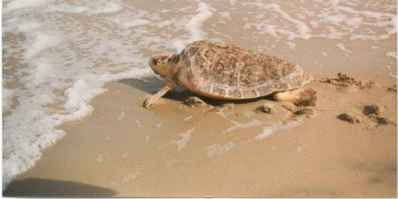 Turtle Magnetism