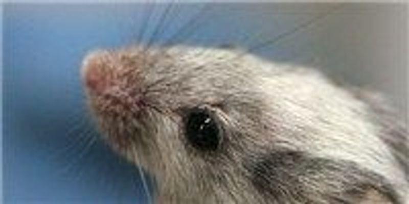 Where Rhinovirus Replicates Best