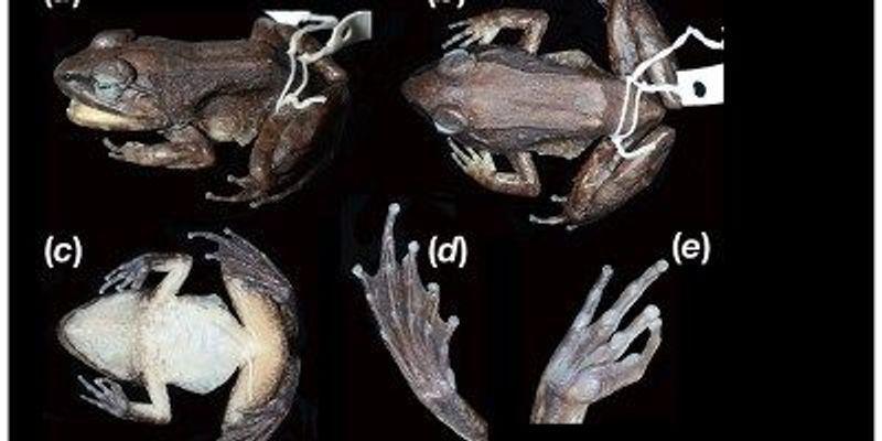 Unique Frog Breeding