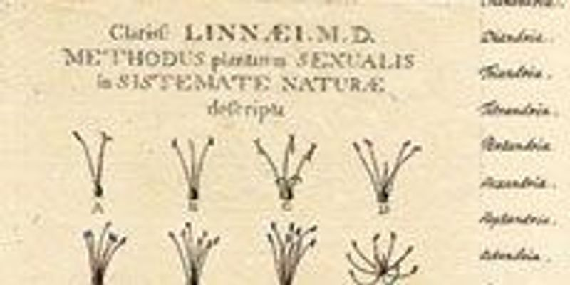 The Sex Parts of Plants, 1736