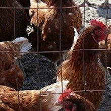 Unraveling H7N9's History