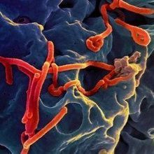 The Year in Pathogens