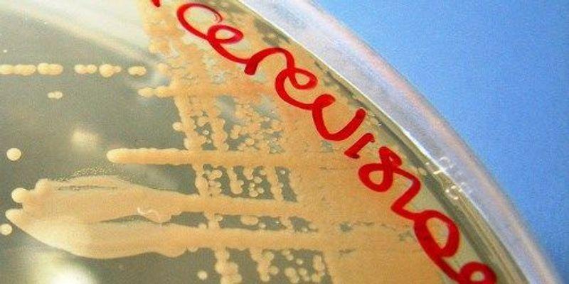2014's Big Advances in Science