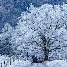 Image of the Day: Phenomenal Frost