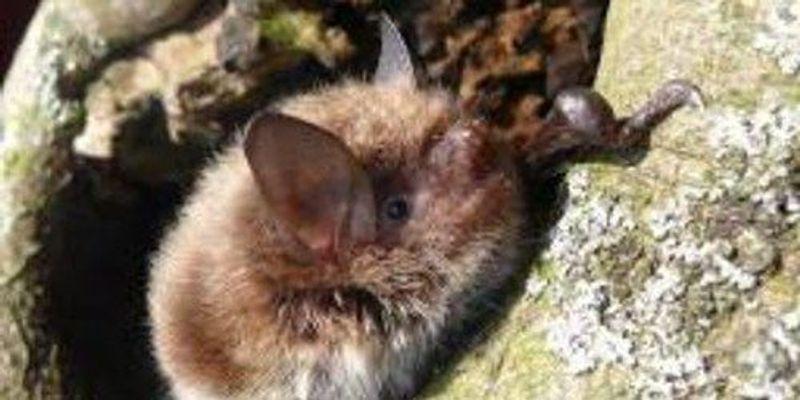 Bats Make a Comeback