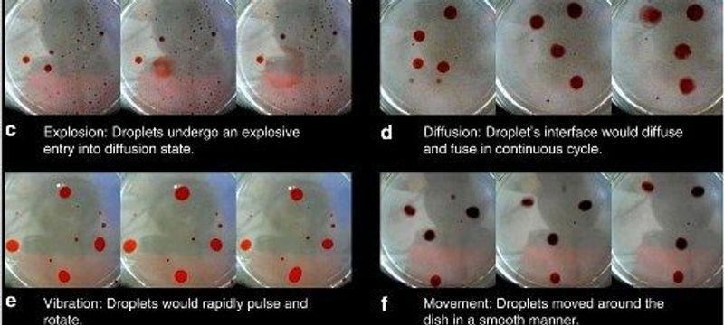 Evolution in Oil Droplets